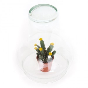 4806-cactus-mini-glazen-stolp-2