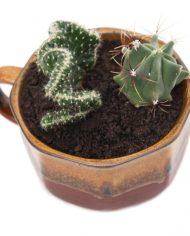 4811-cactussen-vintage-pot-soepkom-bruin-2