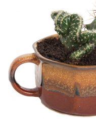 4811-cactussen-vintage-pot-soepkom-bruin-3