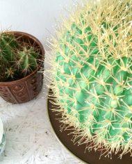 5221-vintage-cactus-lamp-bol-2