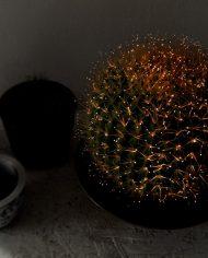 5221-vintage-cactus-lamp-bol-3