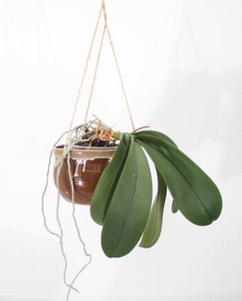 bruine hangpot