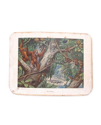Vintage schoolplaat 'op Borneo' van M.A. Koekkoek